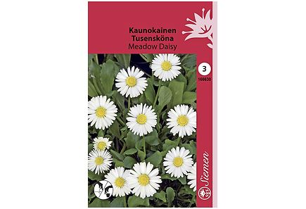 Image for Kaunokainen Meadow Daisy from Kodin Terra