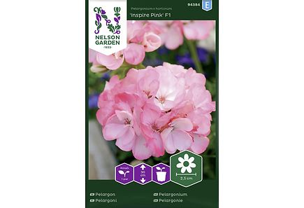 Image for Pelargoni, Inspire Pink F1 from Kodin Terra