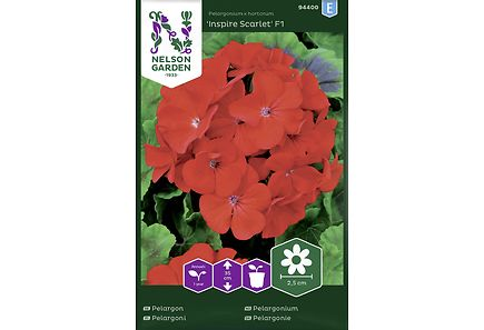 Image for Pelargoni, Inspire Scarlet F1 from Kodin Terra